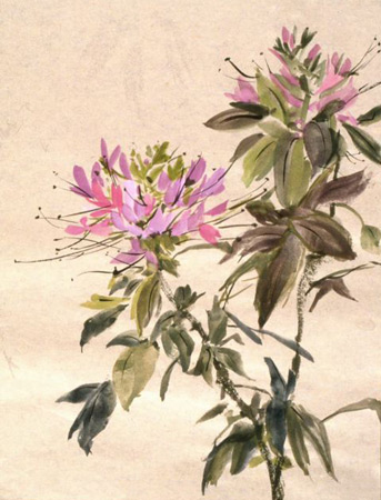 LOVELY CLEOME